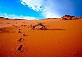 desert-foot-steps